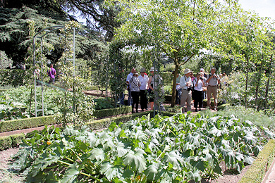 The vegetable plot - garden of Mme Moser