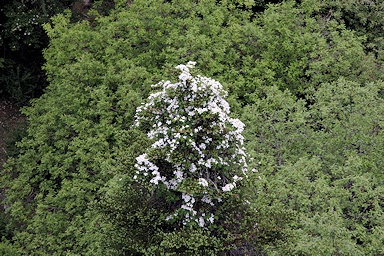 Clematis viewed from the Shika Shan cable car©Ken Woolfenden