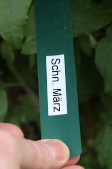 Plant labels with pruning instructing on the back, e.g. Prune in March©Ken Woolfenden