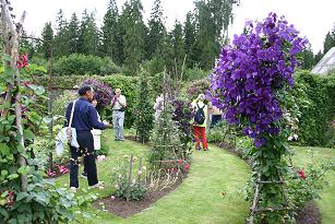 Garden of Ahto Ruut - concentric rings of roses and clematis
