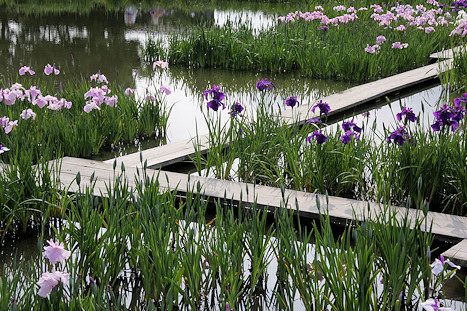 Walkways over lake at Kamo Hanashobu Iris Garden