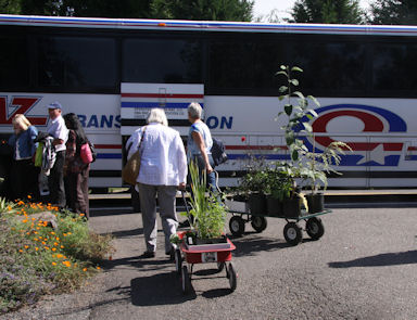 Departing Cistus Nursery