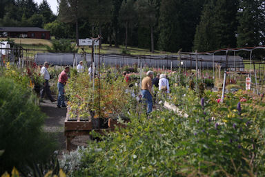 Joy Creek Nursery