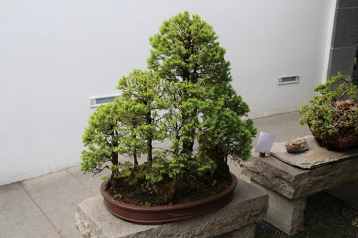 Beautiful bonsai©Ken Woolfenden