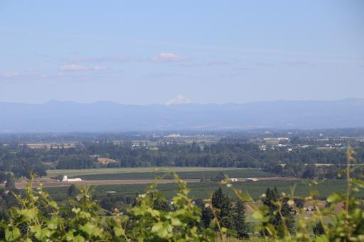 View from Red Ridge, with Mount Hood just visible in centre frame©Ken Woolfenden