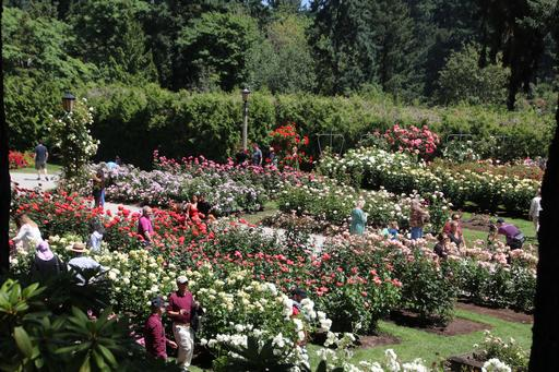 Portland International Rose Test Garden©Ken Woolfenden