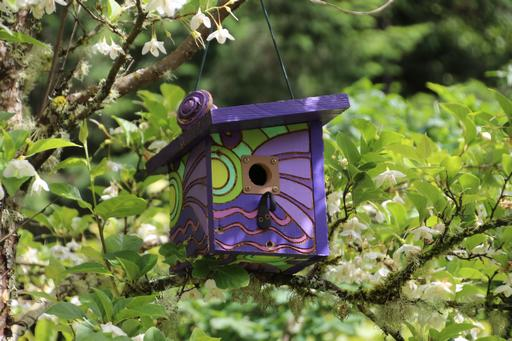Another bright design, this time on a bird box©Ken Woolfenden