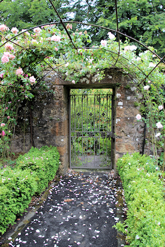 Roses and gate©Ken Woolfenden