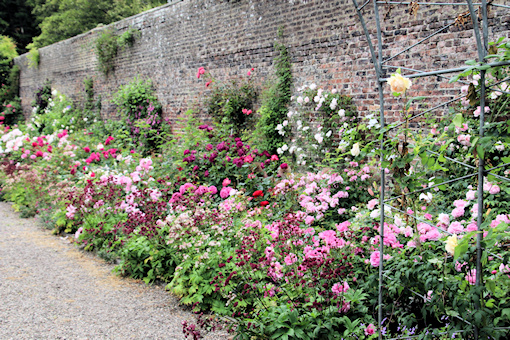 Wall with clematis, roses and astrantia©Ken Woolfenden