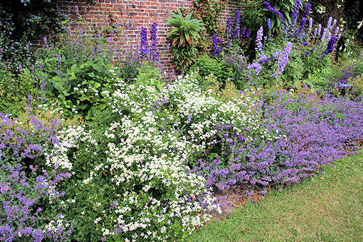 C. recta, nepeta and delphiniums©Ken Woolfenden