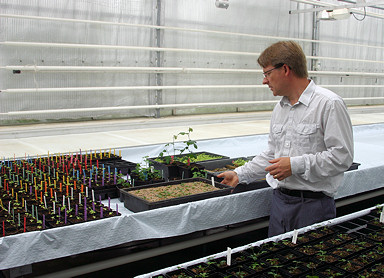 Dr. Kimmo Rumpunen showing some of the breeding programmes at Balsgård