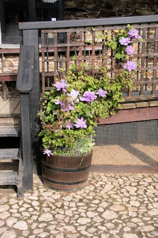 They even had a clematis in the courtyard©Ken Woolfenden