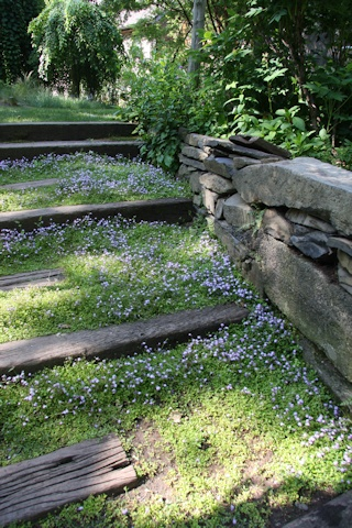 Delicately planted stone steps