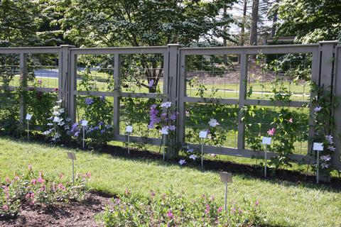 Longwood Gardens - Clematis Trial Ground